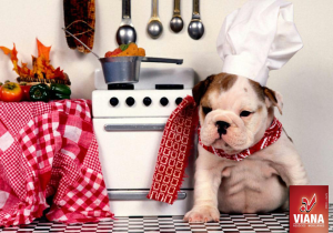 Master-Chef - cãozinho